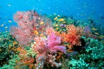 tree corals