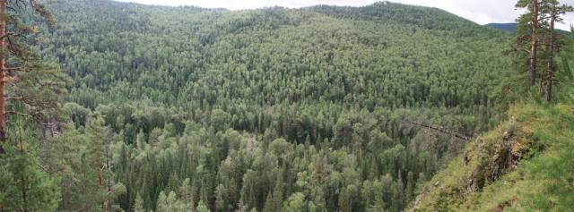 bugantwetlandfirforestnmtns