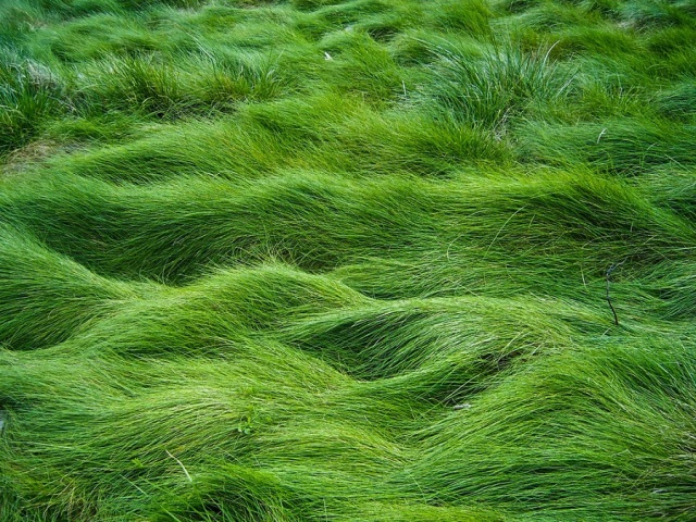 Grass_Field_by_Starna